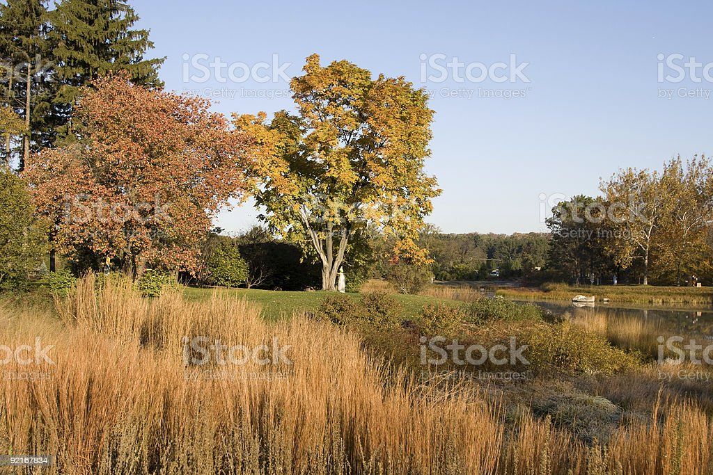 Autumn stock photo