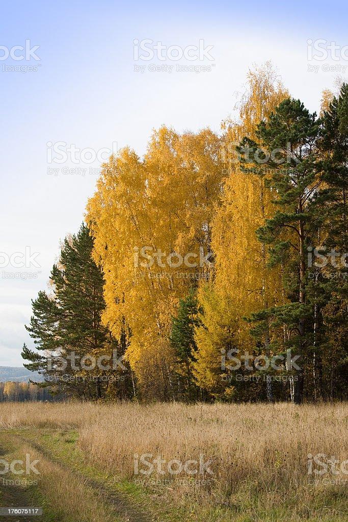 Autumn picture stock photo