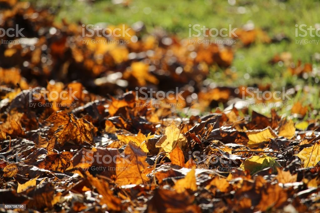 Autumn pictures stock photo