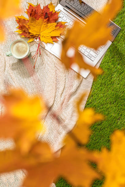 autumn. plaid, laptop, cup of coffee under branch of golden maple leaf on the green grass. concept. vertical ratio. top view - golden ratio zdjęcia i obrazy z banku zdjęć