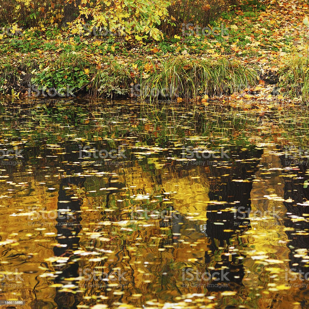 Autumn pond royalty-free stock photo
