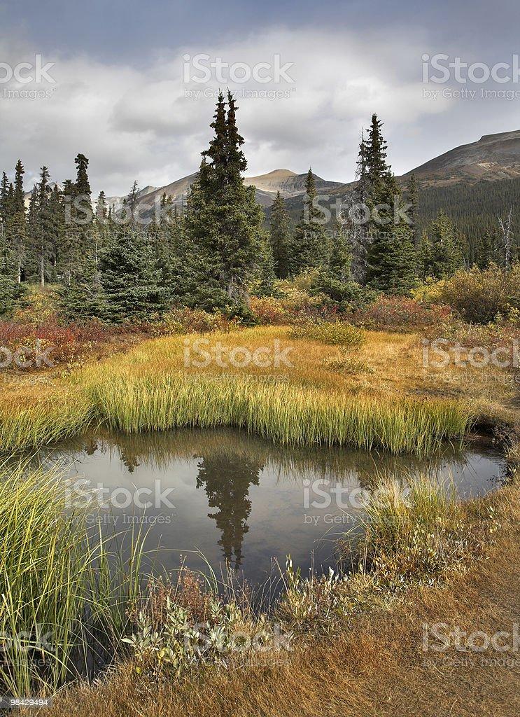 Autumn pond. royalty-free stock photo
