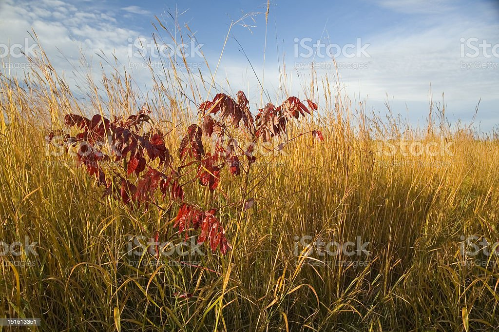 Autumn Prairie with Sumac stock photo
