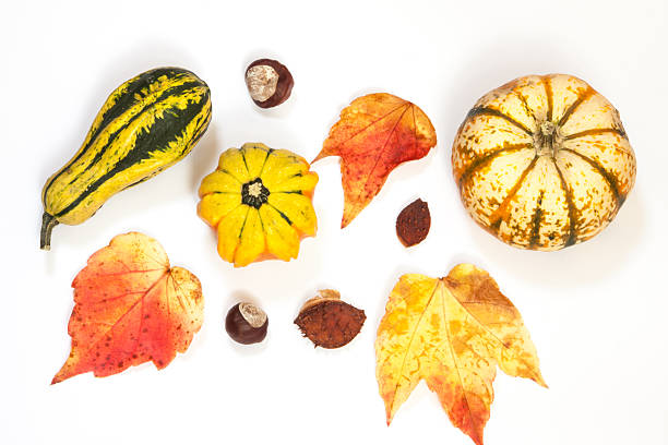 autumn produce and leaves laid on a white surface - gourd stock photos and pictures