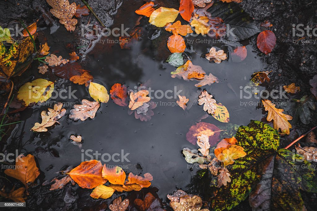 Autumn puddle after the rain stock photo