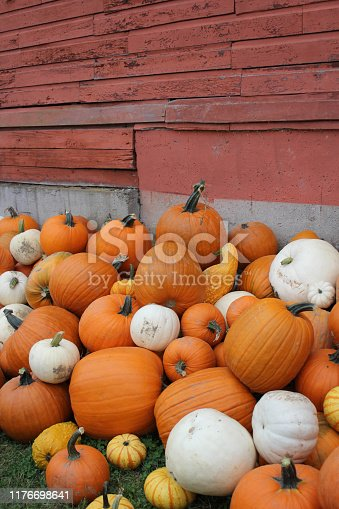 Old red Barn with white and orange pumpkins in a pile
