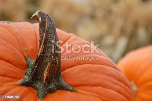 Pumpkins and corn stalks in this classic fall scene.