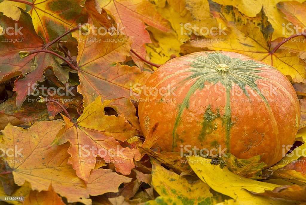 Autumn pumpkin royalty-free stock photo