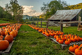 A farm is the mountains of North Carolina is lined up with pumpkins ready to sell.