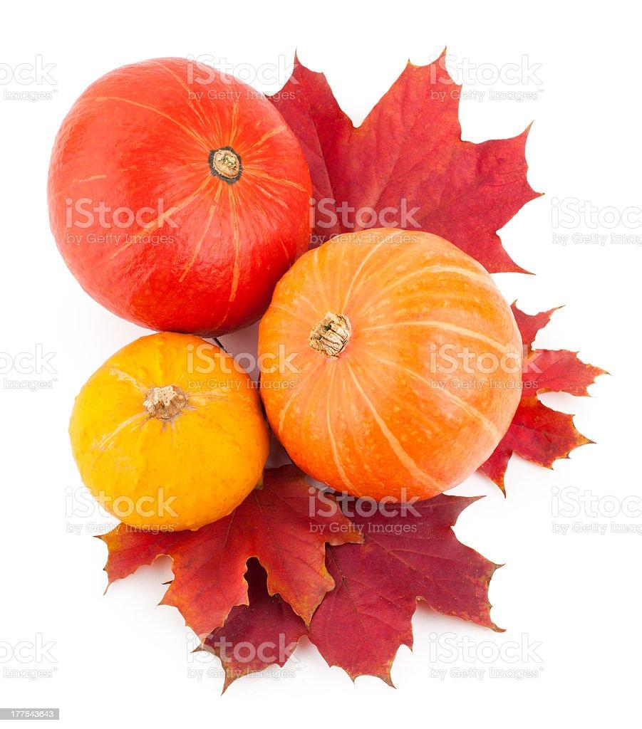 autumn pumpkins royalty-free stock photo