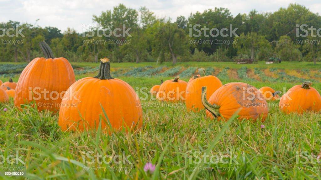 Autumn Pumpkins stock photo