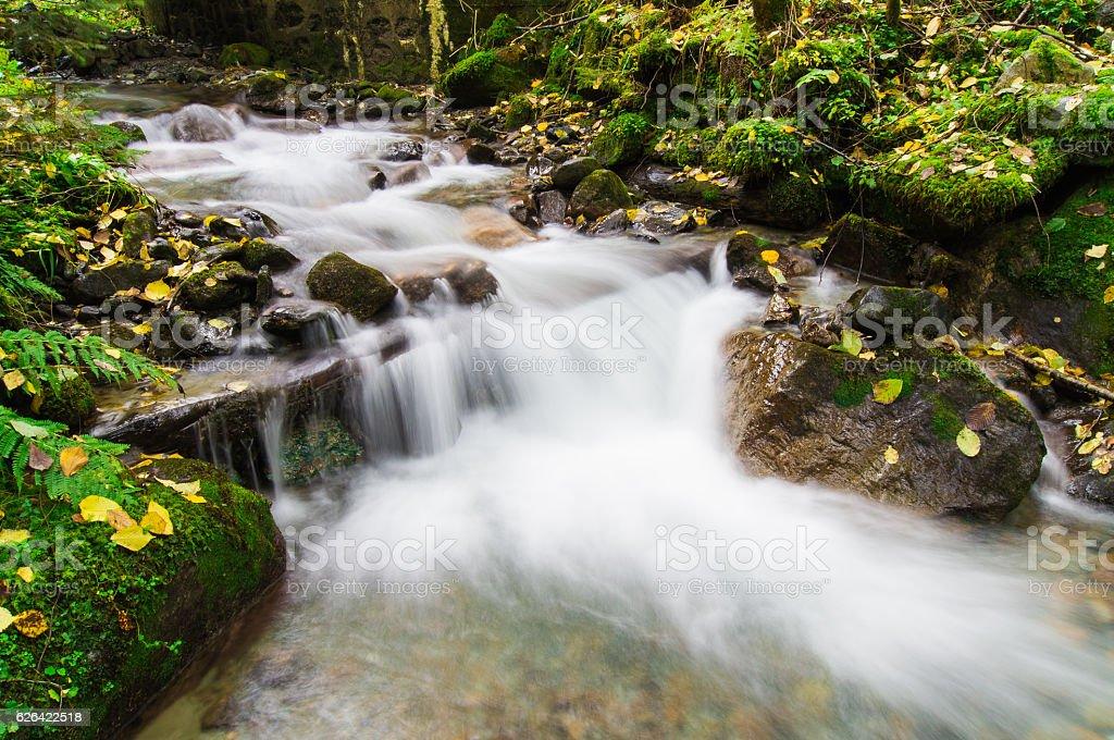 Autumn Quitness on a little stream stock photo