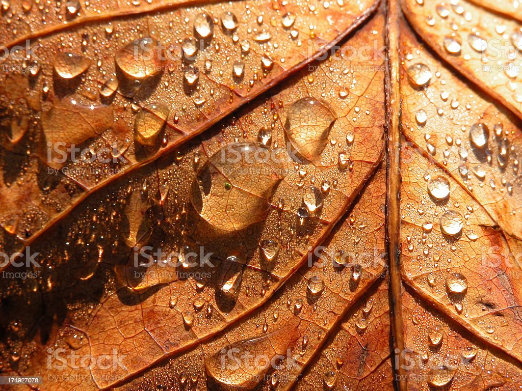Autumn Raindrops stock photo
