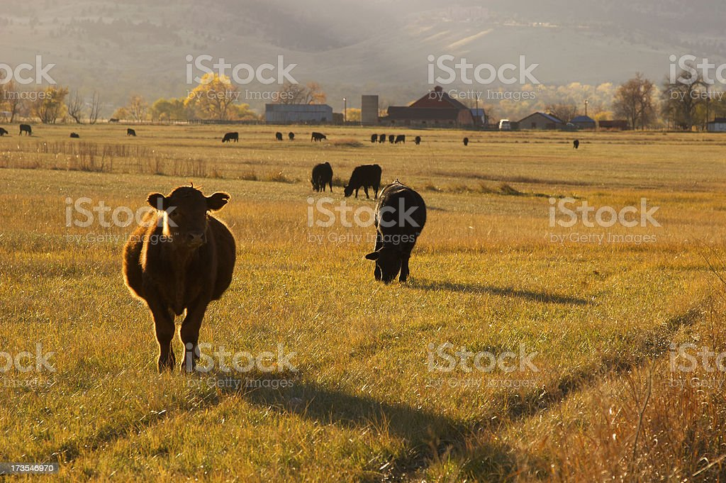 Autumn Ranch Scene royalty-free stock photo