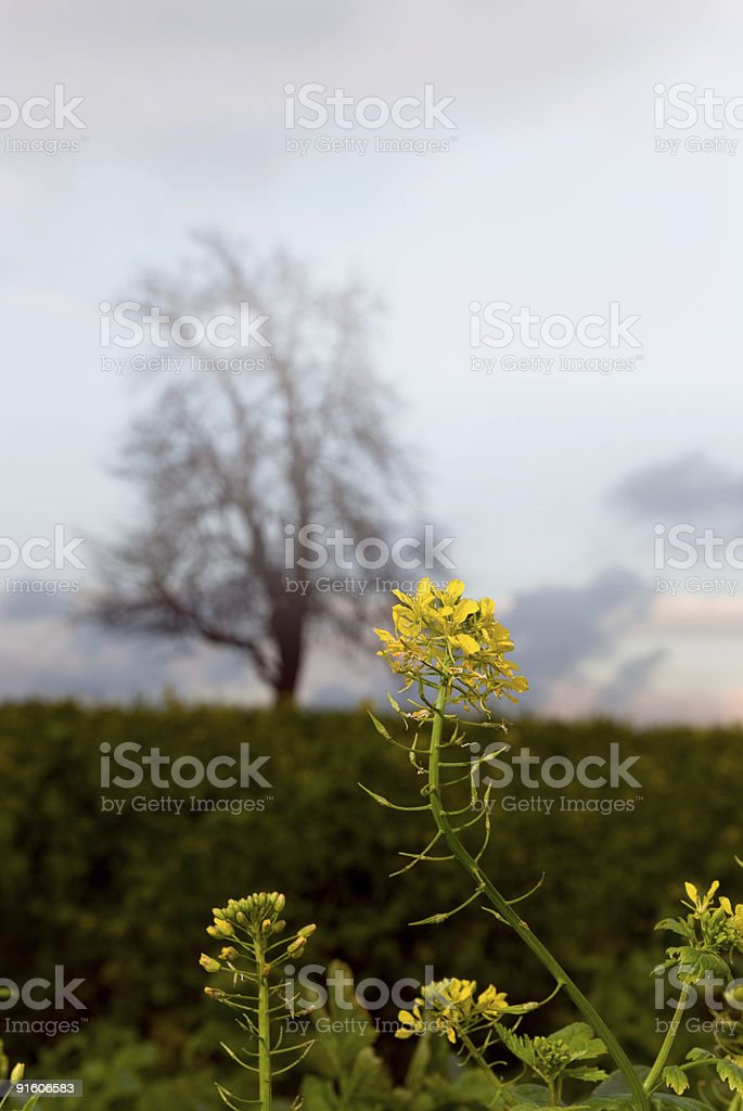 autumn raps royalty-free stock photo