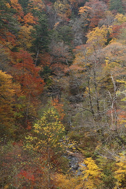 Autumn 峡谷 ストックフォト