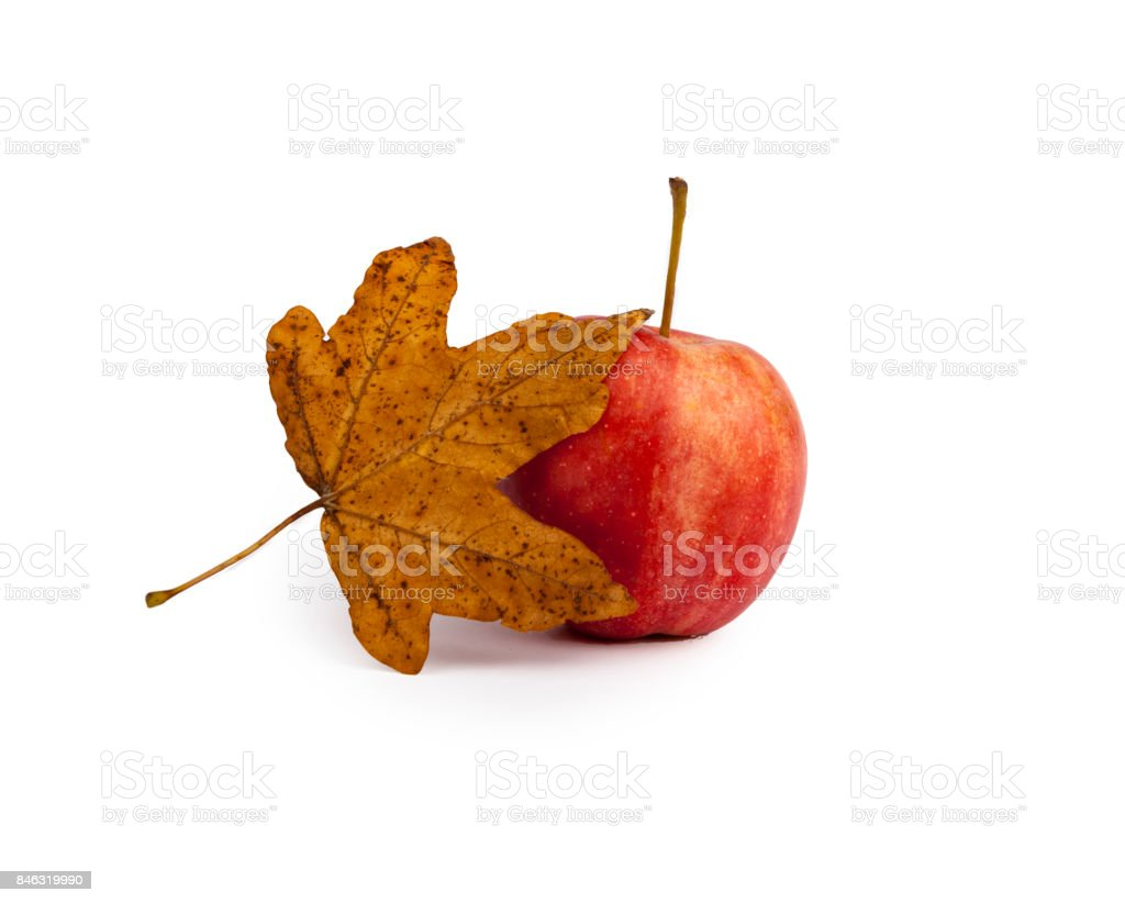 Autumn, red apple,leaves stock photo
