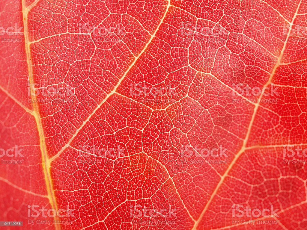 Autumn Red Come royalty-free stock photo