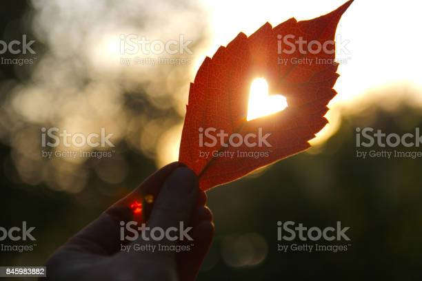 Autumn red leaf with cut heart in a hand picture id845983882?b=1&k=6&m=845983882&s=612x612&h=zic9f93xw5m37pj6u hes4fgf1cwxmhhgbvspbcr8cs=