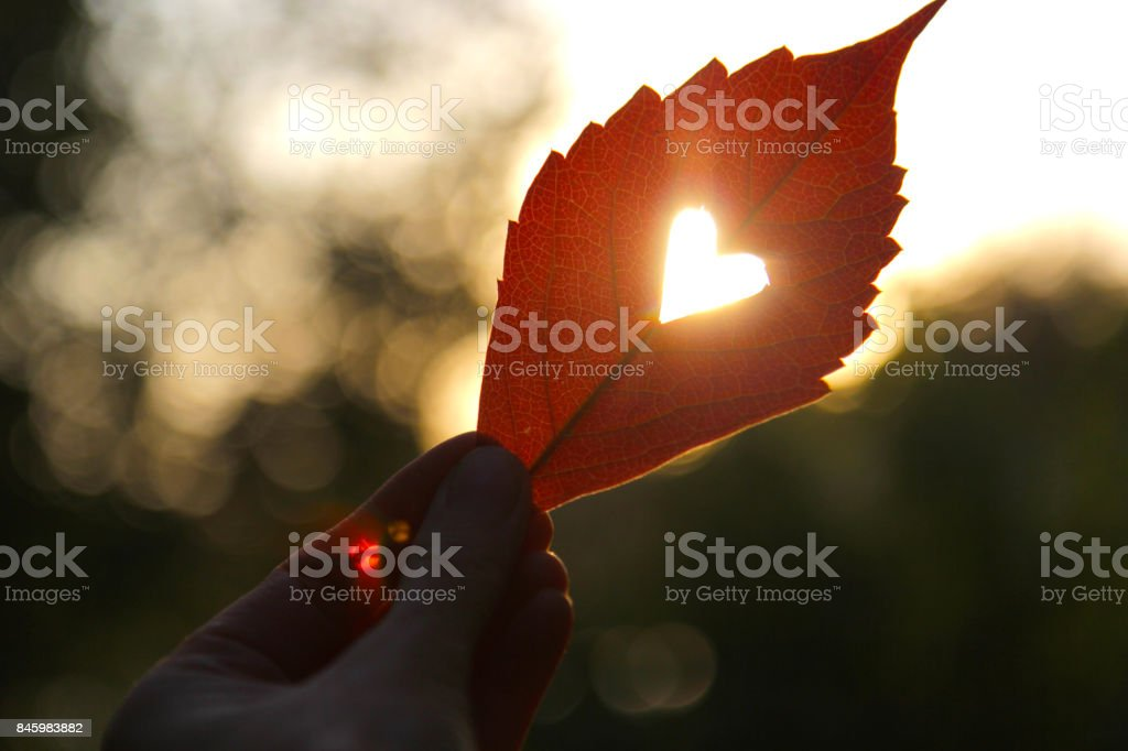 Autumn red leaf with cut heart in a hand - foto stock