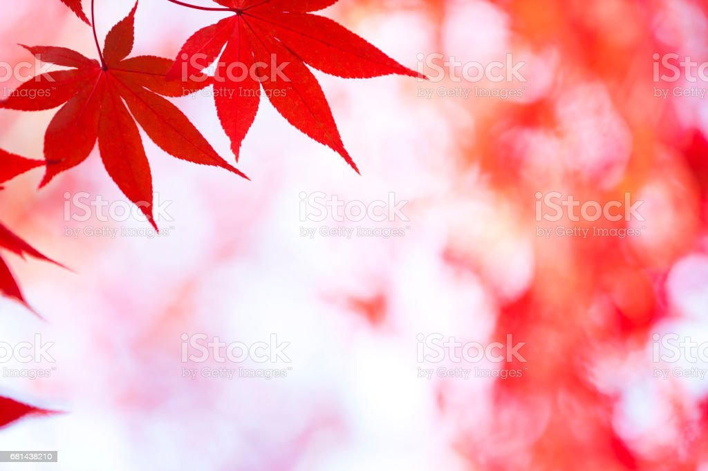 Autumn Red Leaves Close Up royalty-free stock photo