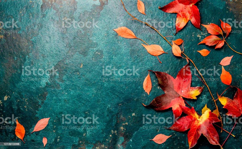 Roten Herbstlaub auf türkis blauem Hintergrund. Kopieren Sie Raum. Ansicht von oben – Foto