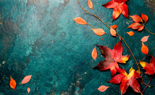 Autumn red leaves on blue turquoise background. Copy space. Top view stock photo
