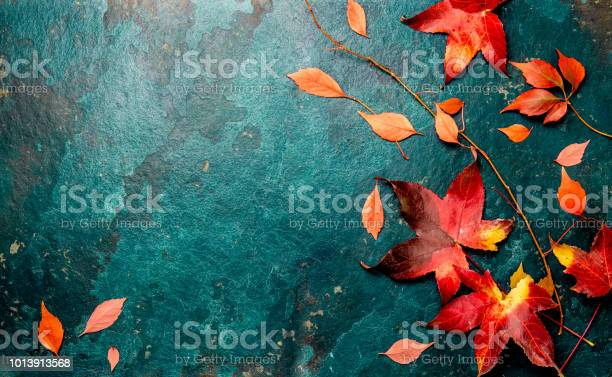 Photo of Autumn red leaves on blue turquoise background. Copy space. Top view
