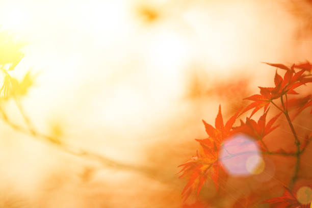 Im Herbst Ahornblätter rote Hintergrund – Foto