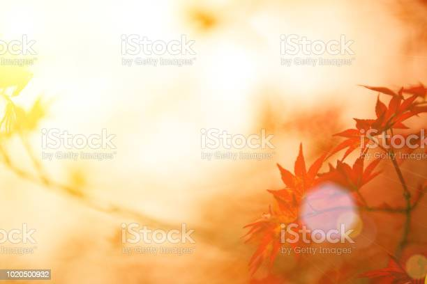 Photo of Autumn red maple leaves background