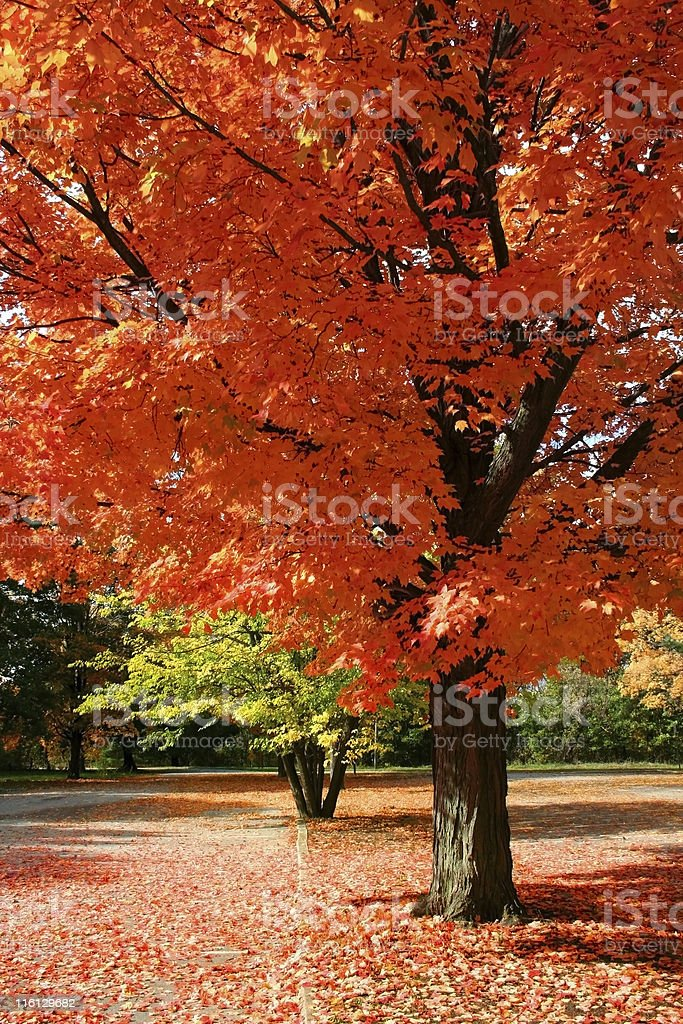 Autumn Red stock photo