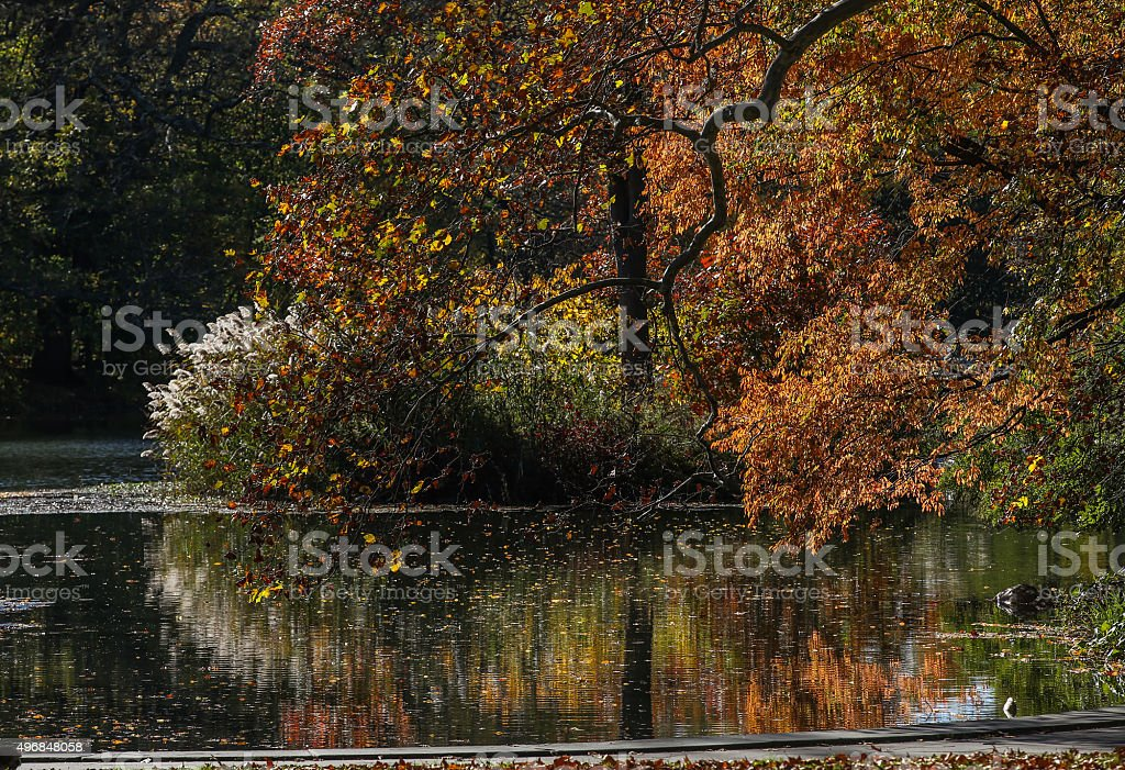 Autumn Reflection - New York stock photo
