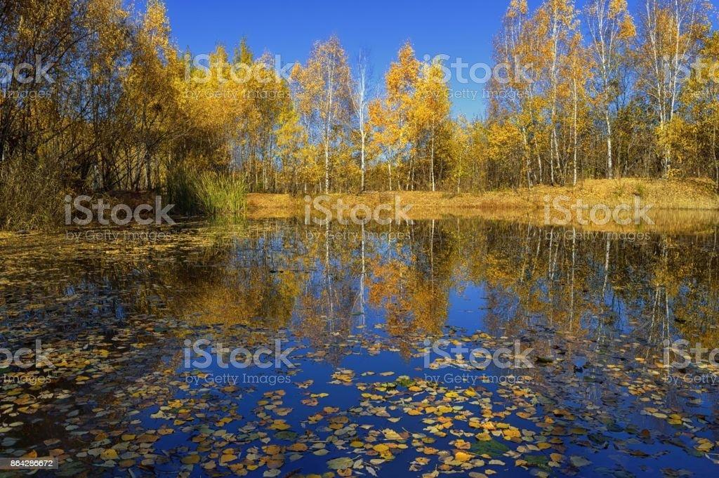 Autumn reflection royalty-free stock photo