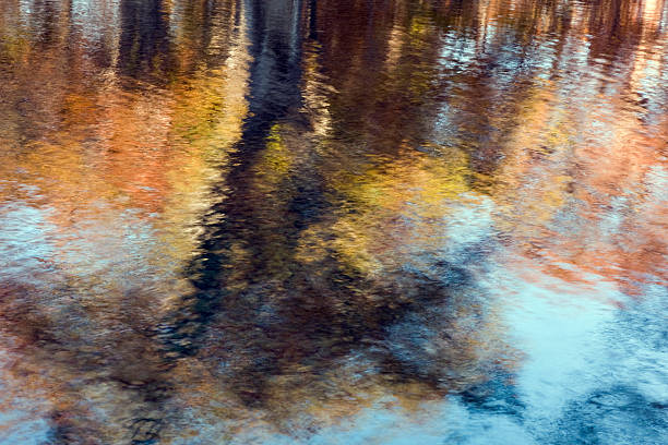 autumn reflections - bald cypress tree stockfoto's en -beelden
