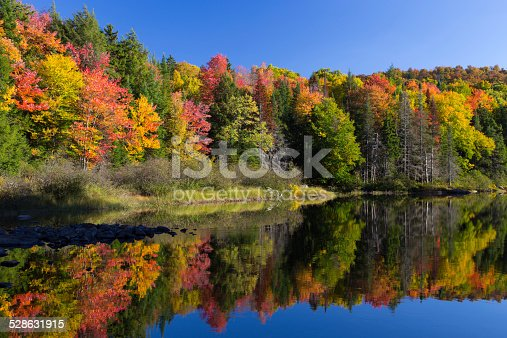 Colorful autumn leaves reflecting in a quiet stream in the Adirondack State Park, NY, USA.