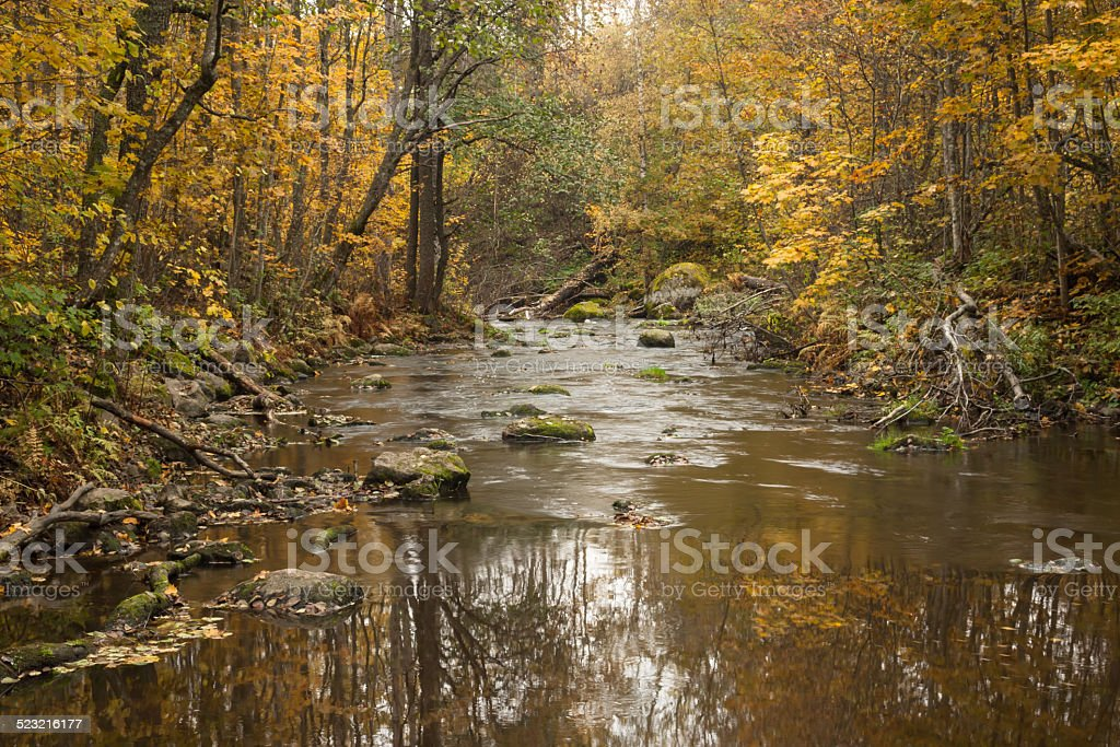 Autumn river across the forest stock photo