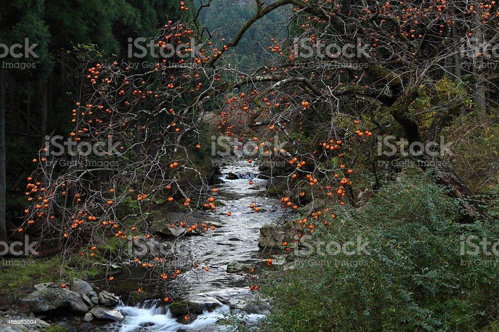 秋の川 ストックフォト