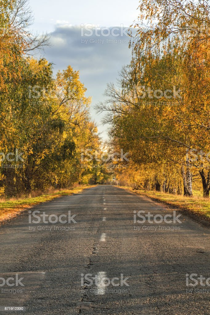Autumn road along winter wheat fields royalty-free stock photo