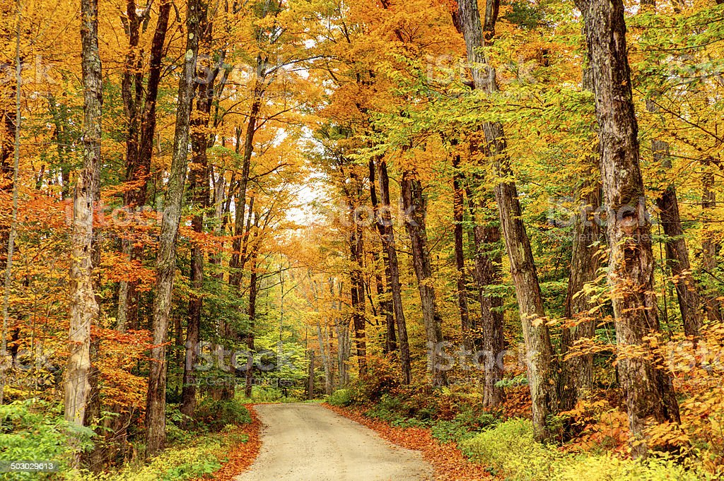 Autumn Road in the Berkshires stock photo
