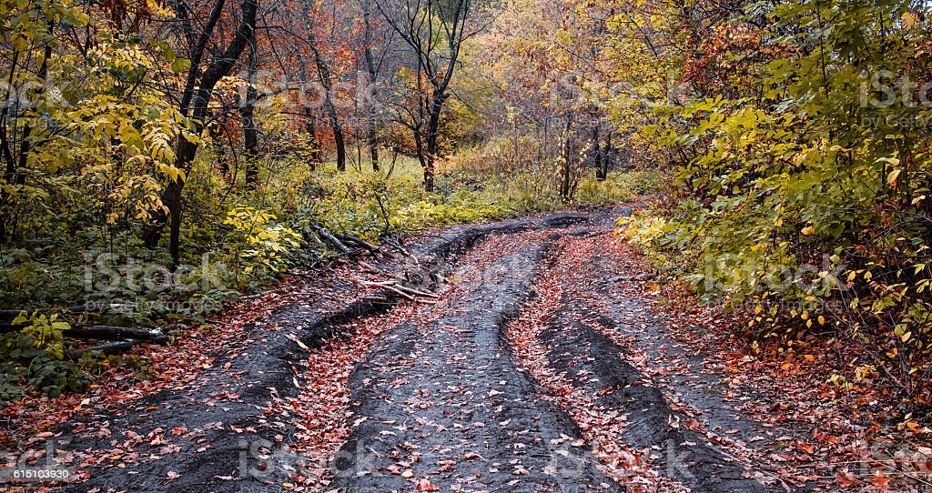 Autumn road in the forest stock photo