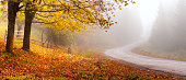 Autumn road. Autumnal landscape with mist over road. Fall nature.