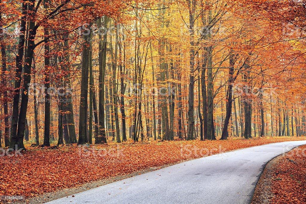 Autumn Road royalty-free stock photo