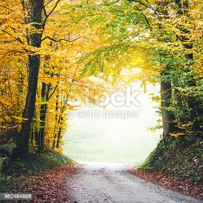 Country road through the colorful autumn forest.