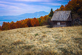 Beautiful autumn alpine scenery, rickety wooden hut near colorful deciduous forest and high mountains in background near Brasov, Magura, Transylvania, Romania, Europe