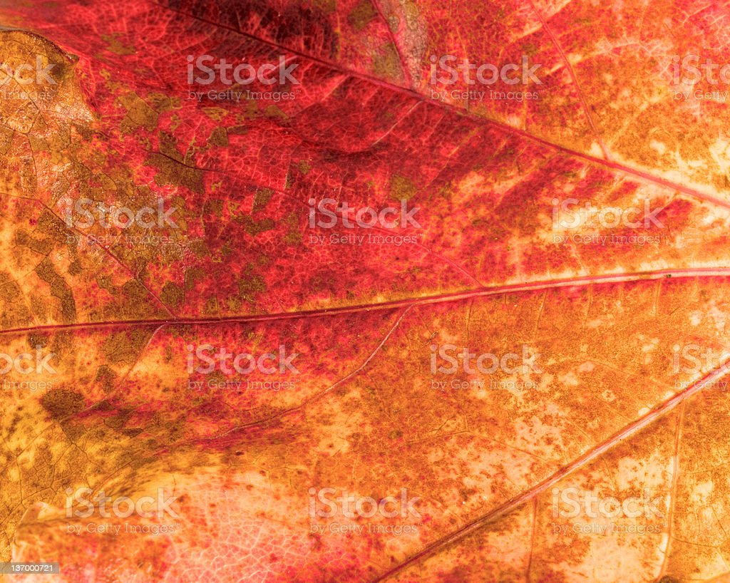 Autumn Russets royalty-free stock photo