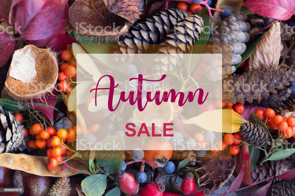 Autumn Sale Banner with Hand Lettering and Leaves, Acorns, Rowan Berries,Chestnut and Rosehip Composition. stock photo