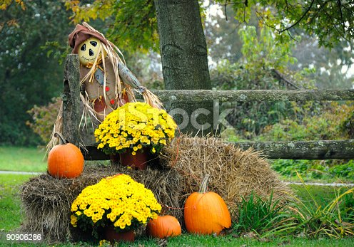 Scarecrow with hay,pumpkins and mums