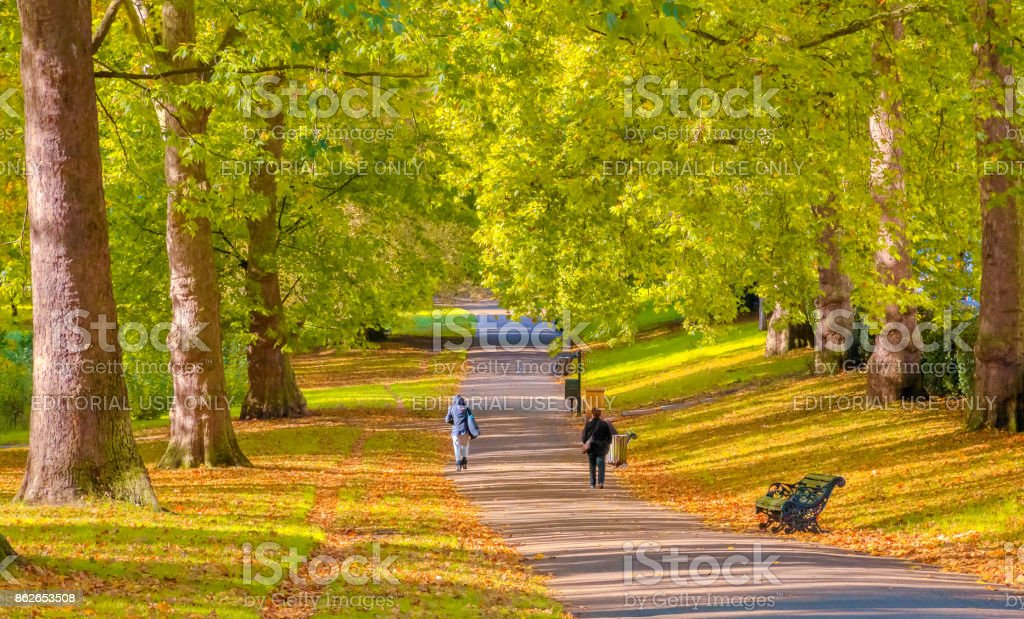 Autumn scene, an avenue lined with trees in Green Park, London stock photo
