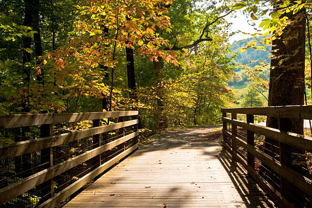 Autumn Scene from Wooden Foot Bridge colorful, peaceful, autumn forest scene from a foot bridge, with receding path charlottesville stock pictures, royalty-free photos & images