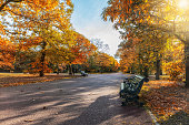Autumn scene with golden colors and sunshine in a park with benches in Greenwich, London